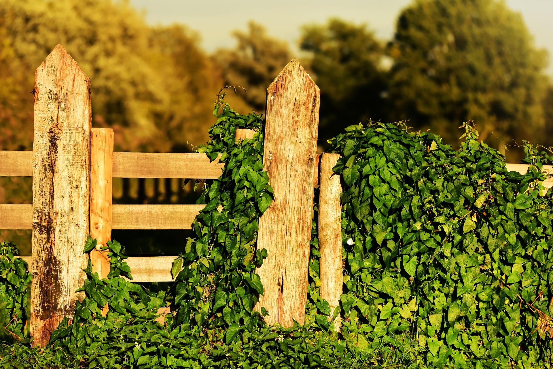 wooden-gate-3682960_1920