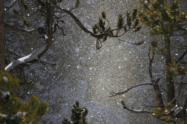 snow night through trees