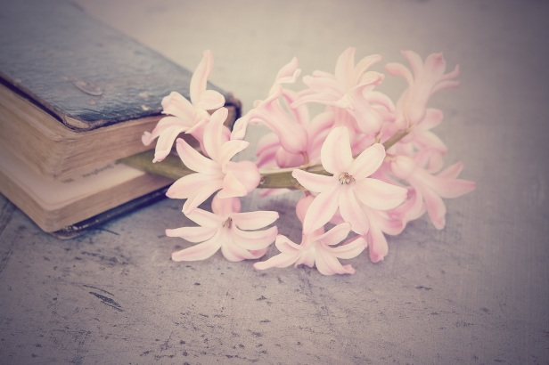 flower-1359522_1920